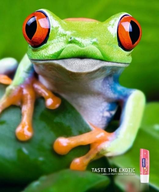 Labello Frog