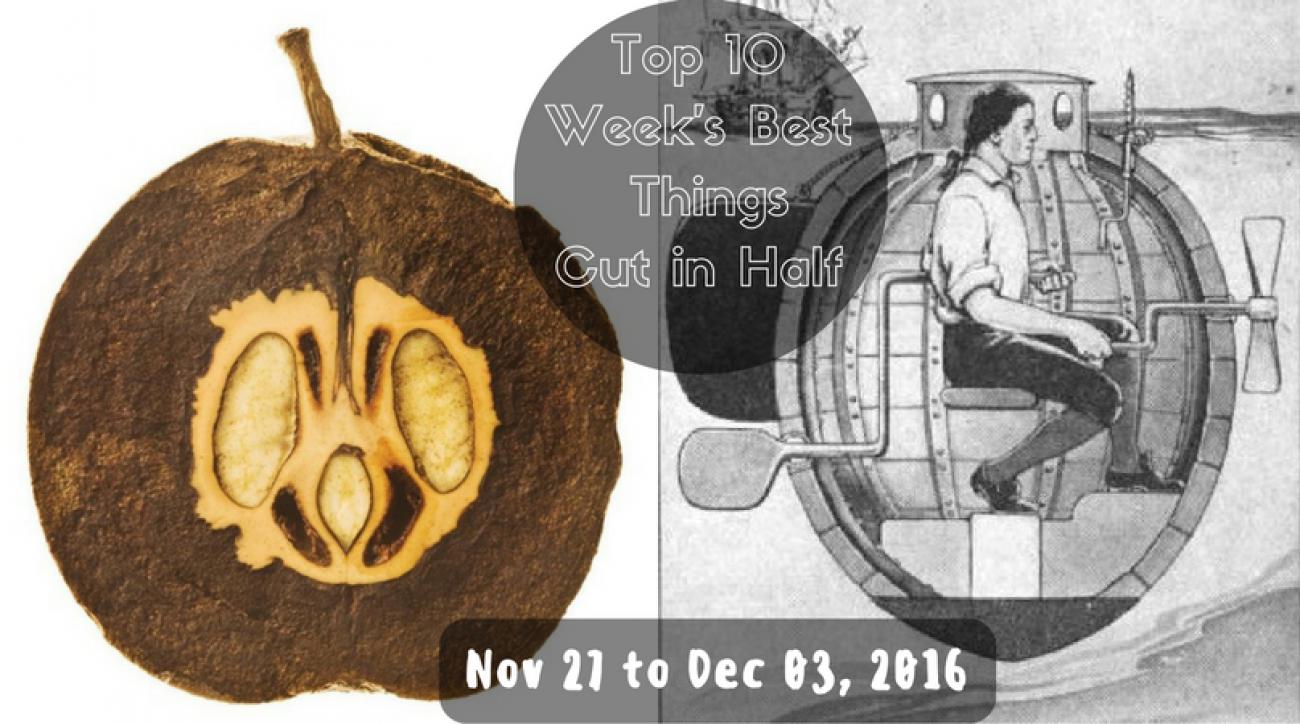 Top 10 Week's Best Things Cut in Half - Nov 27 to Dec 03, 2016